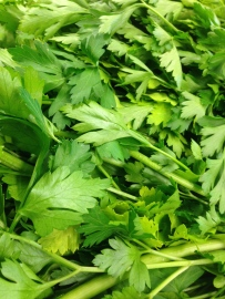 Turkish parsley